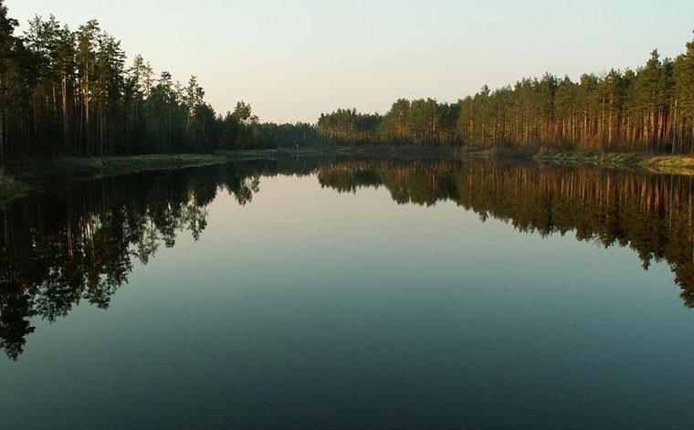Puszcza Solska - Rzeka Szum - zapora (źródło wikipedia.org)
