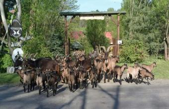 Przedbieszczady w Dolinie Wisłoka Gospodarstwo Ekoagroturystyczne w Wisłoku Wielkim